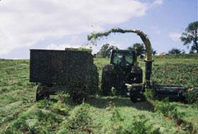 Cutting Bracken